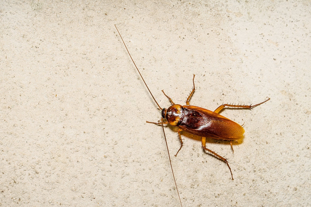 Cockroach Control, Pest Control in Surbiton, Long Ditton, KT6. Call Now 020 8166 9746