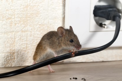 Pest Control in Surbiton, Long Ditton, KT6. Call Now! 020 8166 9746
