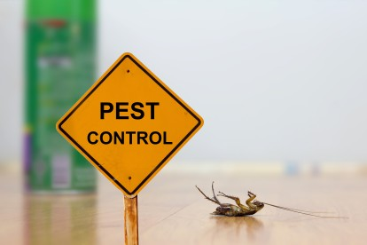 Pest Contol in Surbiton, Long Ditton, KT6. Call Now 020 8166 9746